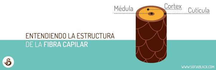 La porosidad del cabello y la estructura de la fibra capilar