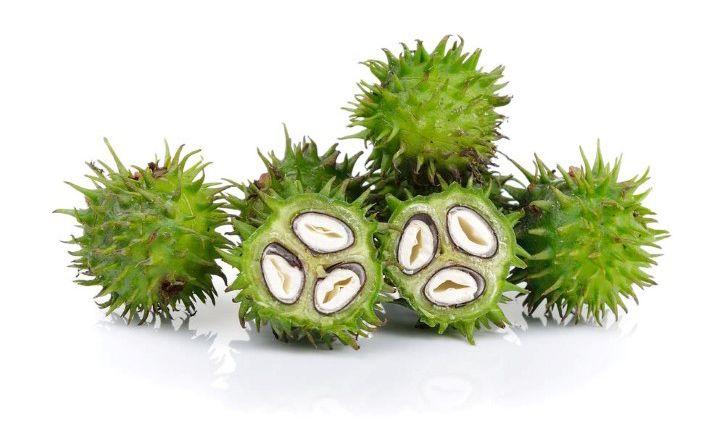 Fruto de la planta Ricinus Communis